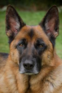 Spiegelen met honden: Bink