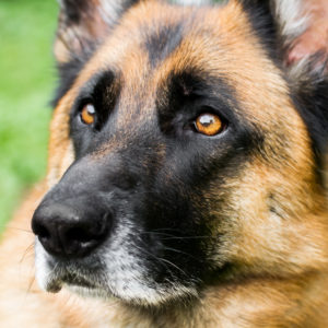 Coachen met honden: Bink